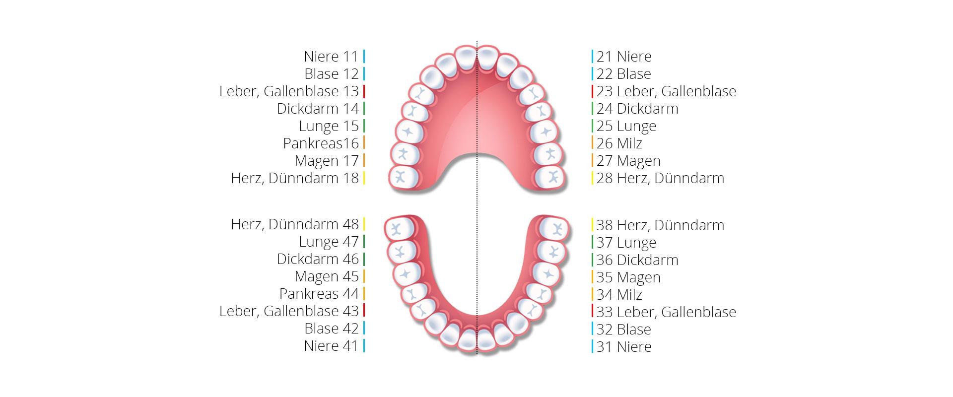 Zahnschema - Zahnarztpraxis Dr. Karoline Skorianz